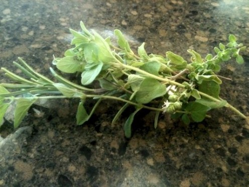 I grabbed a handful of mixed fresh herbs from my garden before cooking.