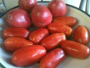 Oxheart and San Marzano Tomatoes