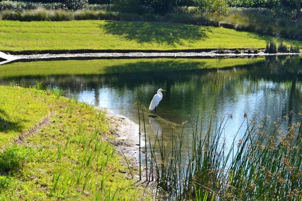 ringling lagoon