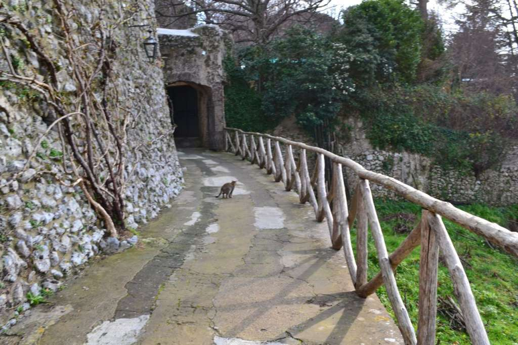 """A """"guide cat"""" leading us to Villa Cimbrone. We saw more cats than people in Ravello."""
