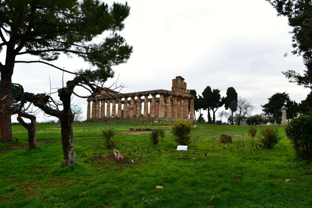 The Temple of Athena in Paestum.